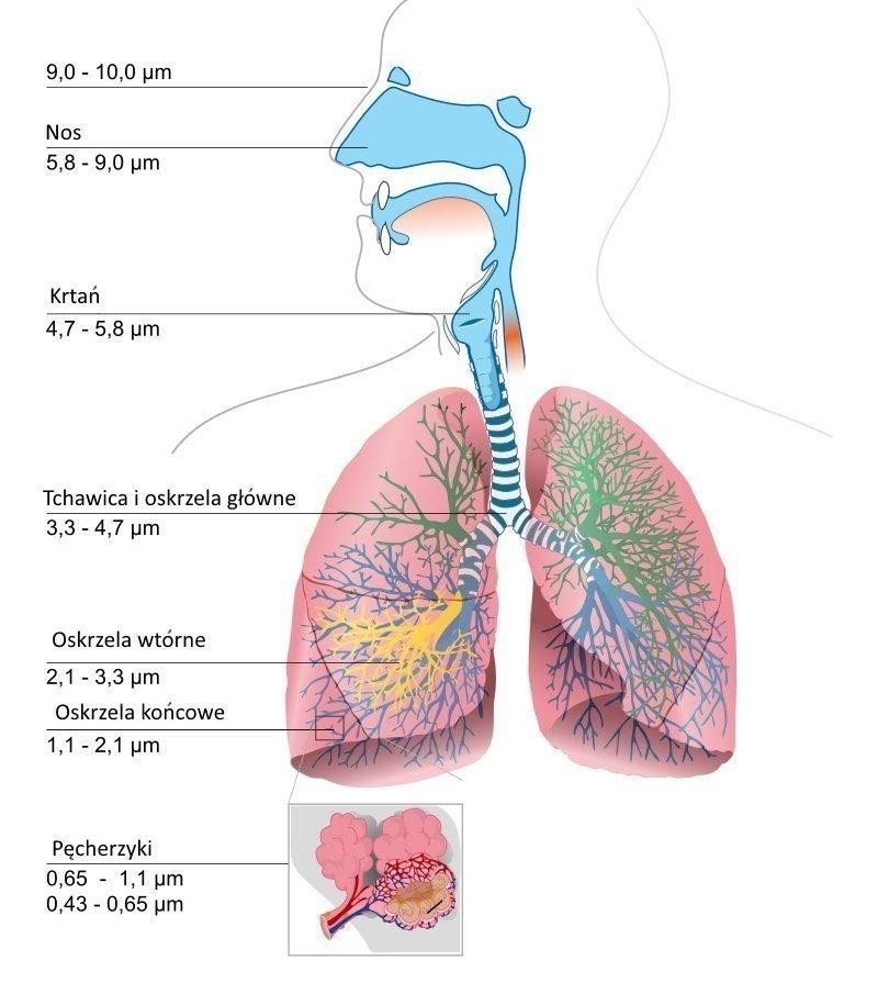 Przenikalność cząstek
